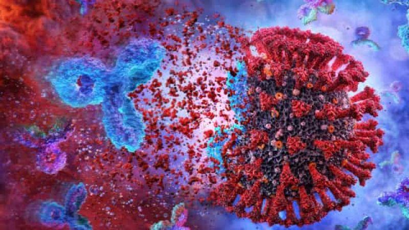 USP: novo coronavírus infecta e se replica em glândulas salivares